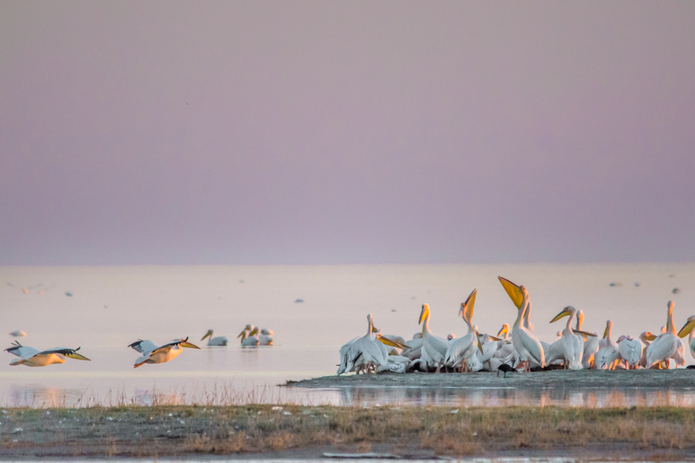 Photographs of Botswana by Melanie van Zyl Nata Bird